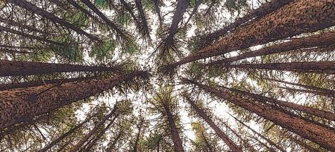 10_UTWORY__Paulina PIDZIK__prawo lasu