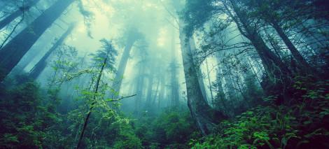 09_UTWORY__Paulina PIDZIK__prawo lasu