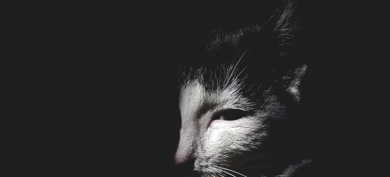 08_UTWORY__Anna Adamowicz__Animalia (2)