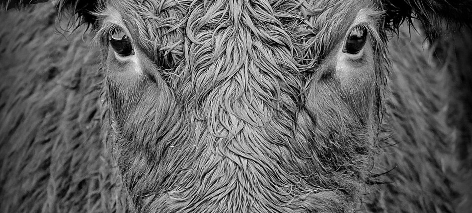 07_UTWORY__Salvador Espiriu__Skóra byka i inne wiersze (1)