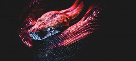 04_RECENZJE__Miroljub Todorović__Co sygnalizuje wąż