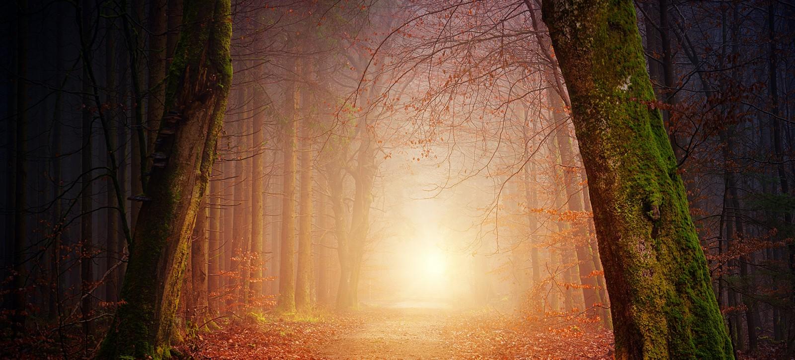 05_RECENZJE__Tymoteusz Karpowicz__Lekcje lasu w poezji Tymoteusza Karpowicza